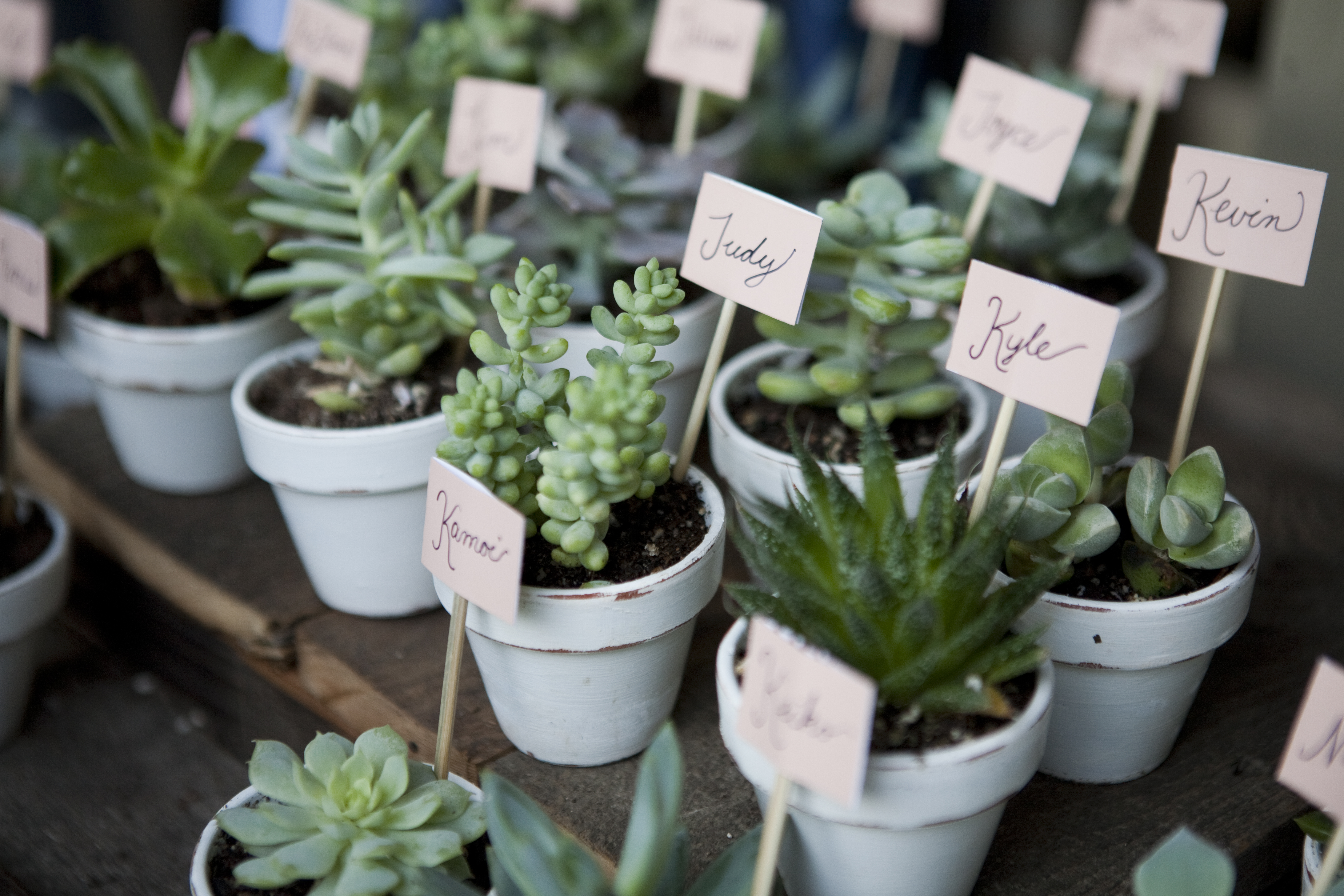 A variety of succulent wedding favors with name tags.